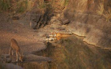 Ranthambore-National-Park-1-960x636