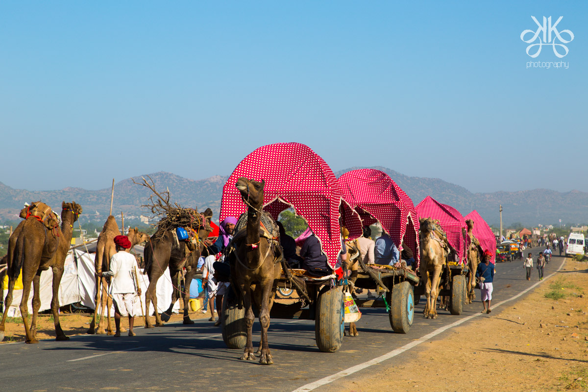 kaynatkaziPhotography;solofemalephotographer; travel pics; pushkar camel fair; 2016; travel pics
